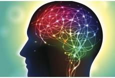 Работу нейронных сетей головного мозга удалось увидеть при помощи новой уникальной технологии